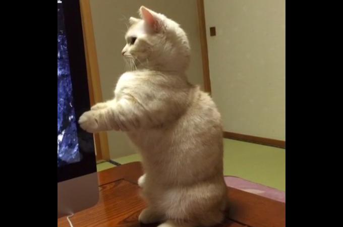猫背なんてもう言わせない!背筋ピーンの猫が可愛いすぎると話題に