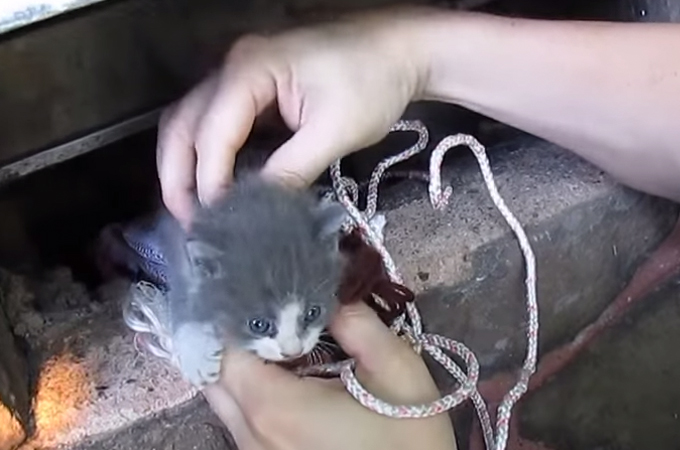 親子愛は確かにここにある!隙間に落ち、救い出された子猫を気遣う母猫の姿に感動