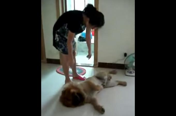 お風呂なんか大嫌い!入れられないためには死んだフリまでする愛犬が可愛すぎる