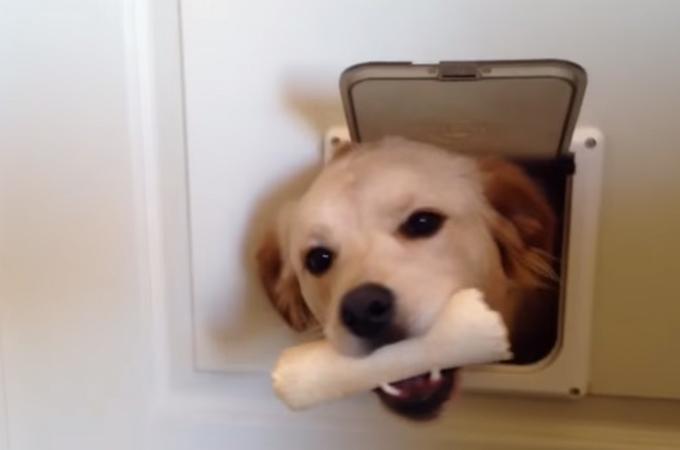 猫用の小さなドアから「Hello」と挨拶に来た犬。その後の予想外の展開に思わず笑顔に
