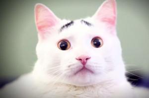 困っていなくても、「なんでいつも困ってるの?」と聞かれちゃう困り眉の猫が話題に!
