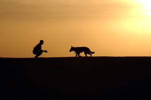 死期を悟ったかのようにバトンを渡す、飼い主さんを生涯守り続けた犬の感動のお話