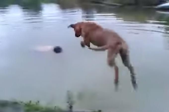 湖で溺れている飼い主さんを無事救助した犬!ためらうことなく飛び込む勇敢な姿に感動