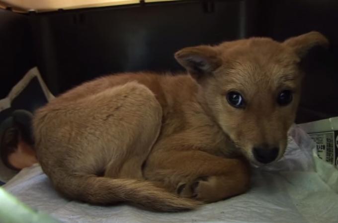 処分寸前で保護され災害救助犬となったある1匹の犬の感動の物語!「夢之丞の物語」