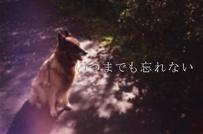 飼い主さんのにおいを決して忘れることはない愛犬!事故で亡くなった子供と犬の絆に涙
