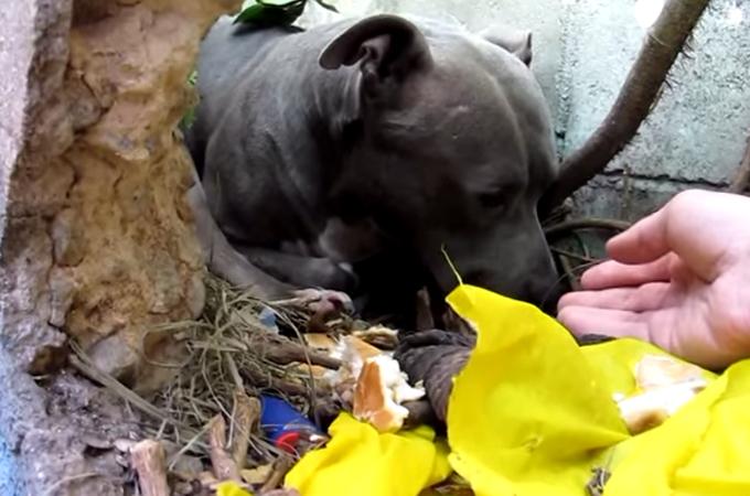 虐待を受けていた1匹の犬。保護に関わった人々の支えによって明るく変化していくその表情に涙