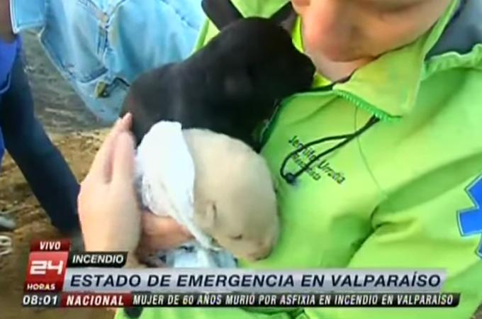 大火災に巻き込まれてしまった子犬たちを救うため母犬がとった奇跡の行動に感動