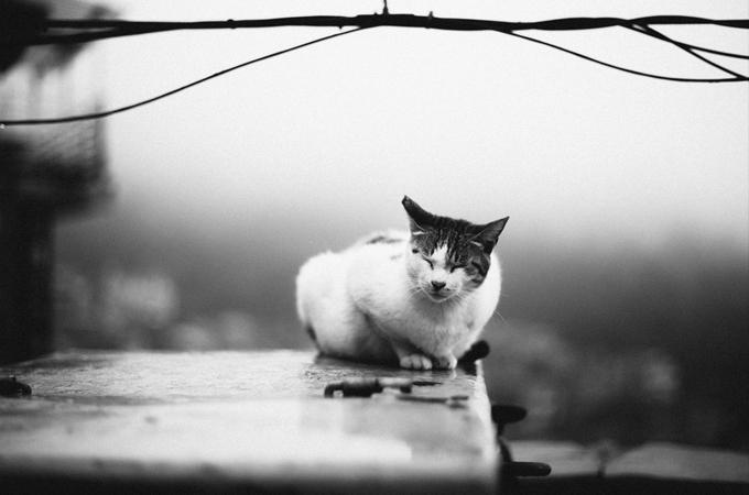 震災で漂流した猫を保護!その1匹の猫が運んできてくれた幸せに心打たれる