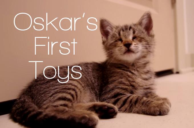 目が見えないというハンデを抱えた猫オスカー!そのハンデをものともしない姿に多くの人が感動