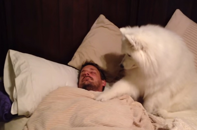 飼い主さんにどうしても起きて欲しくて仕方がない!愛犬の愛情のこもった起こし方に笑い