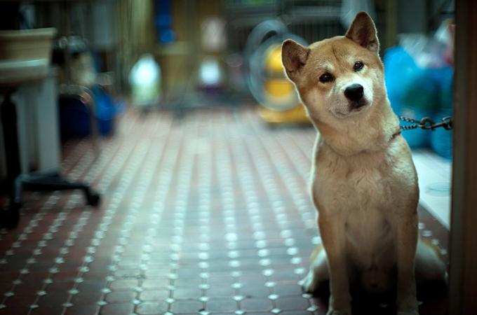 愛犬と主人が共に逝く!悲しくもとても不思議な人と犬の友情の話に涙