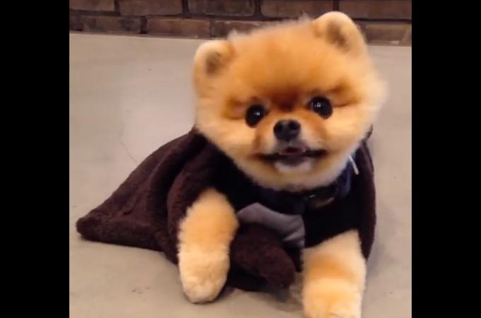 スーパーアイドル犬がまたまた特技を披露!可愛すぎるその表情に世界中が笑顔に