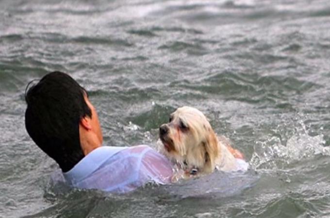 海へと転落してしまった犬を救うために飛び込んだ通りすがりのヒーローのお話