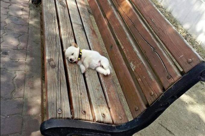犬だからと言ってみんな散歩が好きだと思わないで!散歩に行きたくない犬たち画像15選+動画