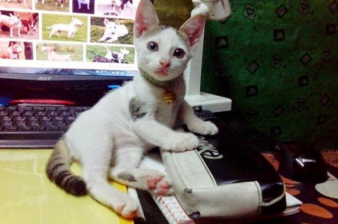 人の愛でここまで変わる!傷だらけで保護された猫たちのビフォー・アフター21選