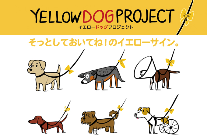 黄色いリボンの犬は「そっと見守って」のサイン!日本にも広めたい「イエロードッグプロジェクト」