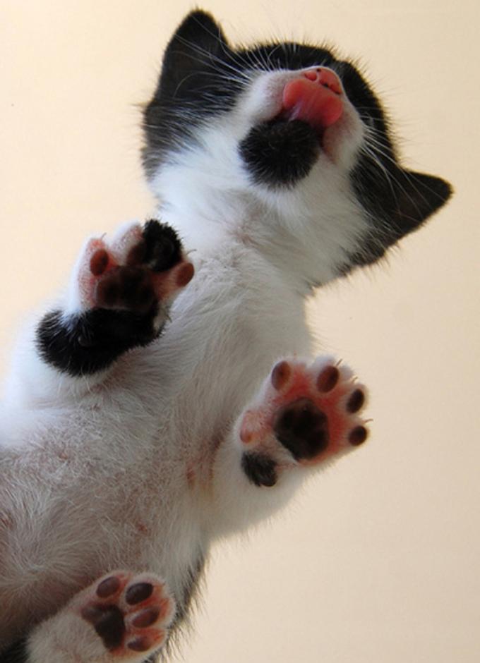 下からみた猫11