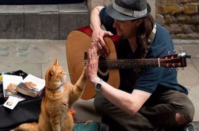 傷だらけの猫を救った1人のホームレス!そしてその猫が運んできた幸せに世界が感動