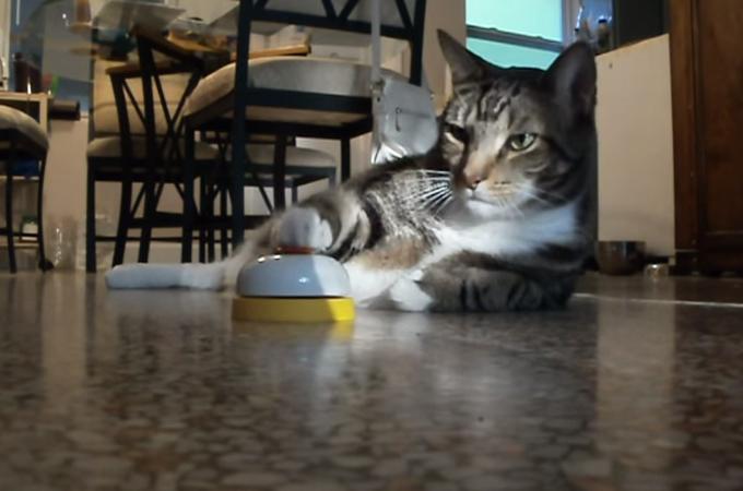 まるでファミレス!ベルを鳴らしおやつをもらう猫。呼び出し回数が迷惑レベル