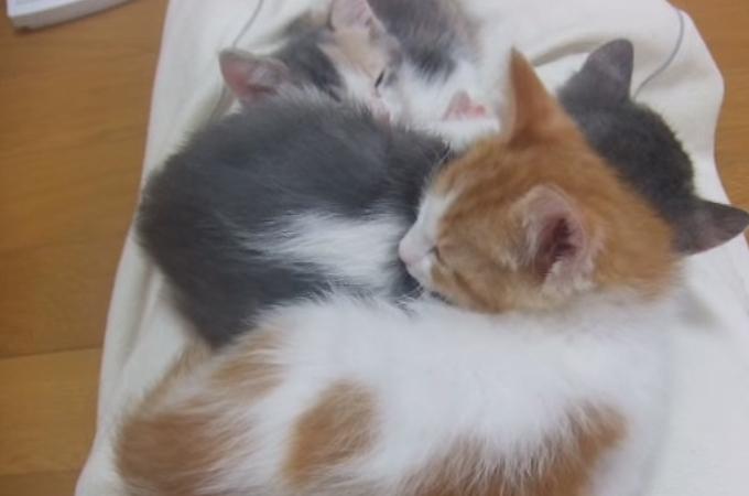 子猫は全部で何匹?数えようと真ん中の子を持ち上げたら可愛い答えが隠れていた