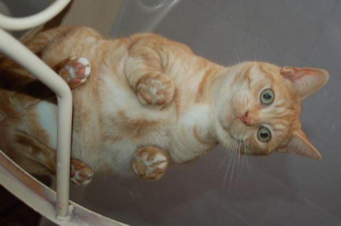 下からみた猫14