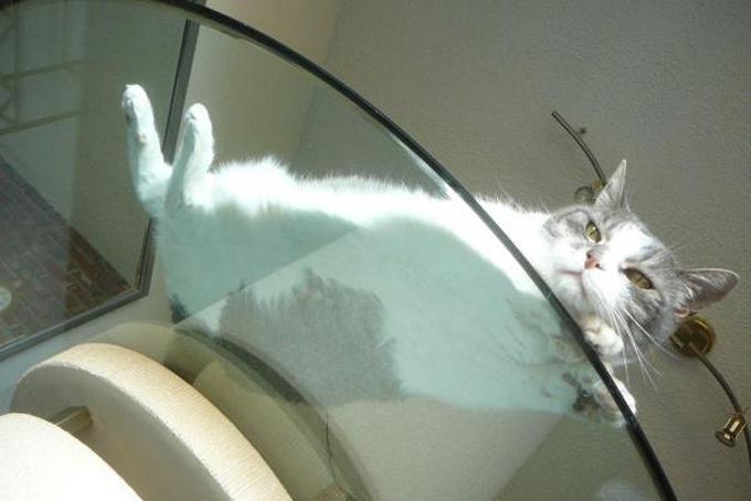 下からみた猫16