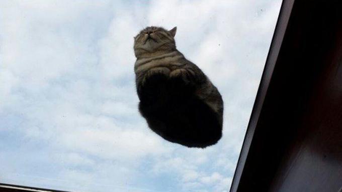 下からみた猫18