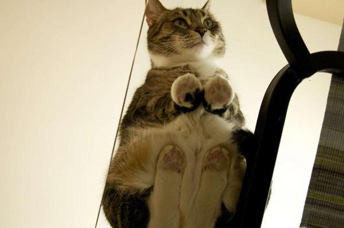 下からみた猫1