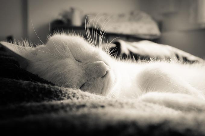 飼い主さんの死期を悟り後を追う猫。絆が呼びよせる不思議な死についてのお話