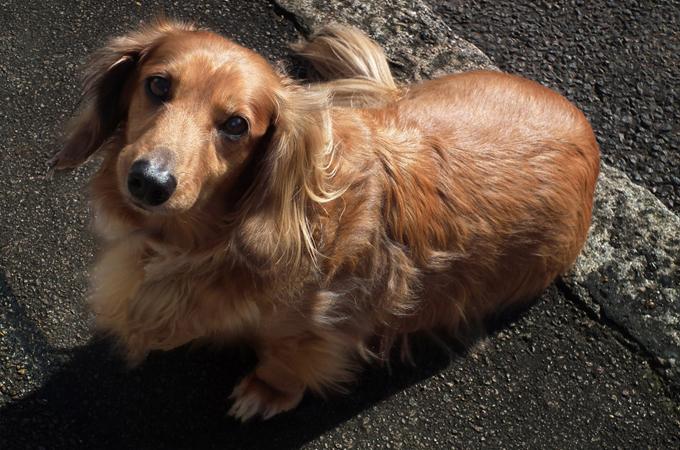 愛犬の死によってつながれた家族の絆。大切なものとは何か気付かされる感動のお話