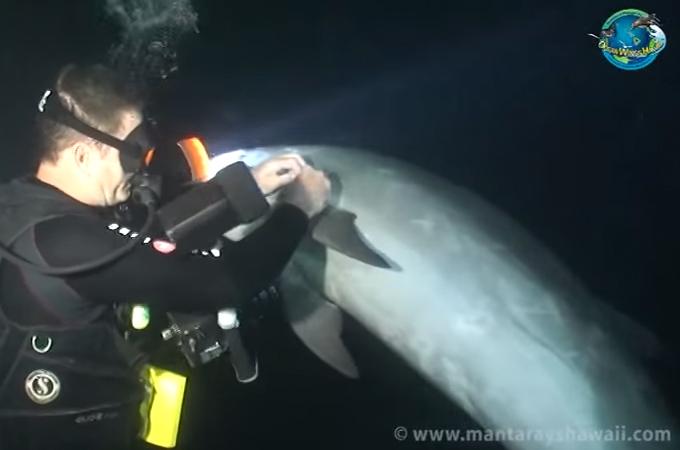 イルカ救出2