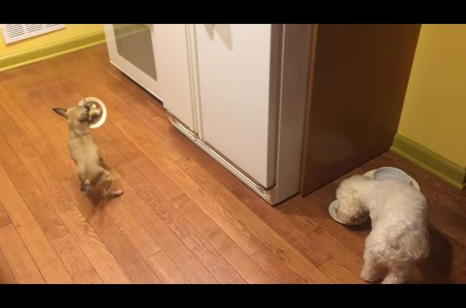 一人ご飯が味気ないのは犬も同じ!一緒に食べようと誘う健気な姿が可愛い