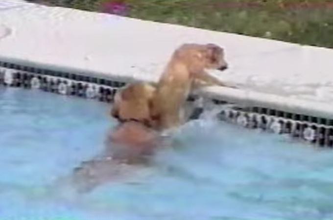 プールで溺れかけた子犬!躊躇することなく助けに飛び込んだ母犬の愛に感動