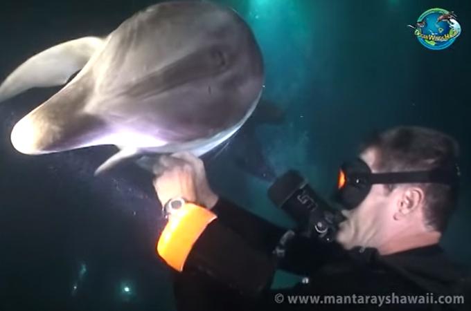 イルカ救出3