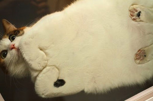 猫には裏表がある!飼い主さんの知らない姿があるかもしれない、猫を下から見上げた画像18選