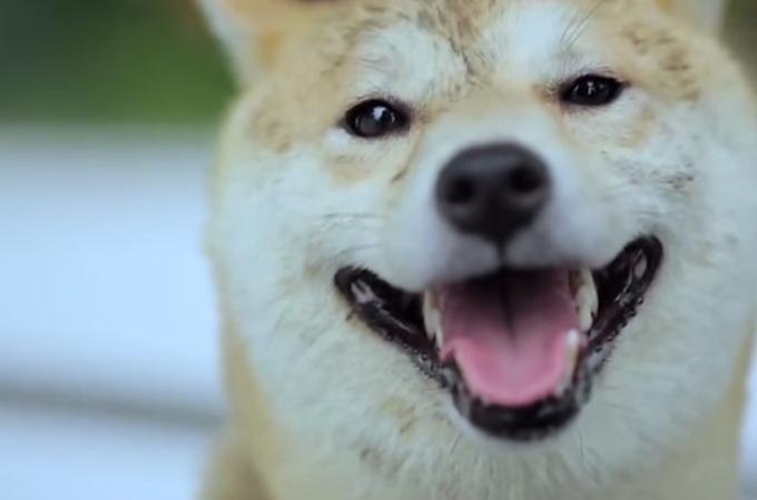 「ボクのこと忘れないで…」自分を捨てた飼い主をそれでも愛し続ける犬の涙のストーリー