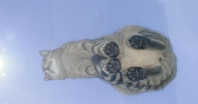 下からみた猫5