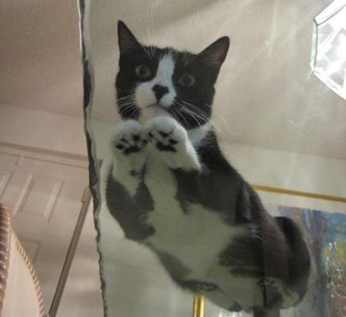下からみた猫9