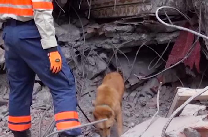 殺処分寸前で保護され災害救助犬となった「夢之丞」、再び命を救うべくネパールへ