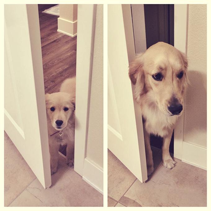 成長した犬12