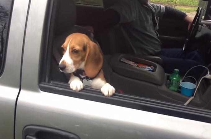 外を見ていたいけど少しずつ閉まる窓!かたくなに頑張る子犬の姿が可愛い
