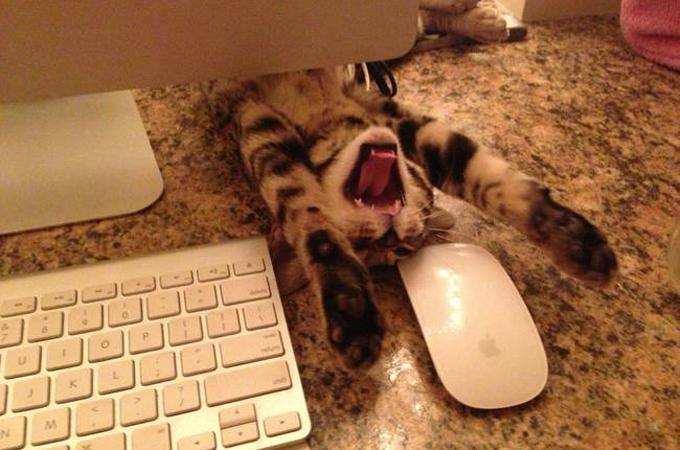 お仕事中なのはわかってるけどどうしてもかまって欲しい猫の画像18選