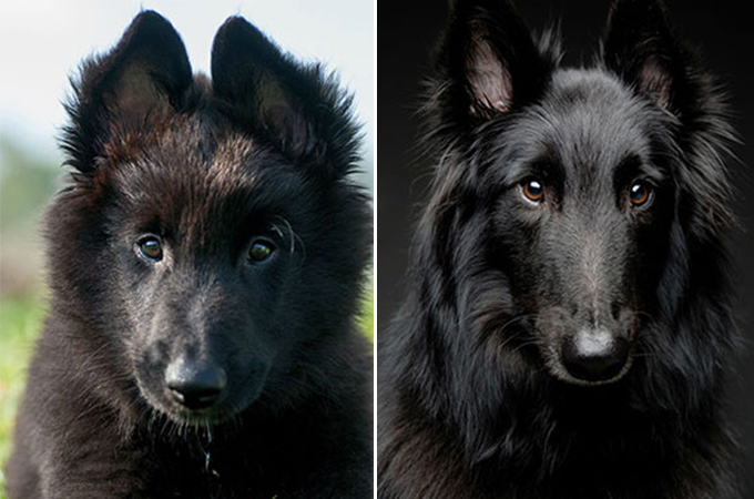 成長した犬19