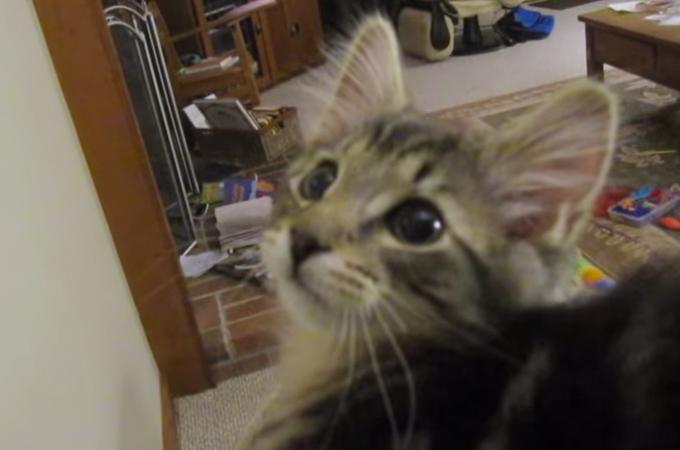 目を閉じて聴いたらまるでヤギ!可愛い子猫の変わった鳴き声にビックリ
