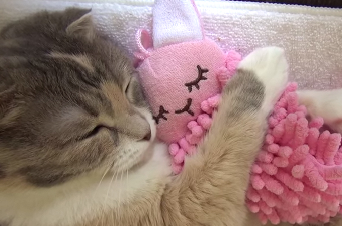 猫好きはもちろん、犬派もなっとくの天使のような子猫の寝顔にキュンとする