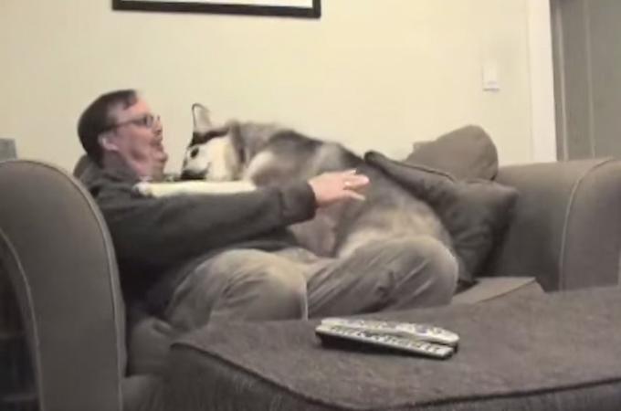 大好きな飼い主さん!かたときも離れたくないから抱きついちゃう犬が愛らしい