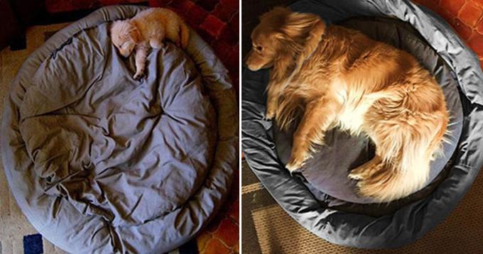 成長した犬2