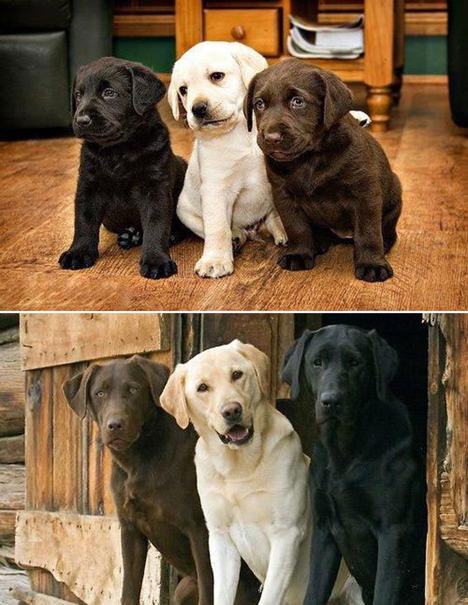 成長した犬3