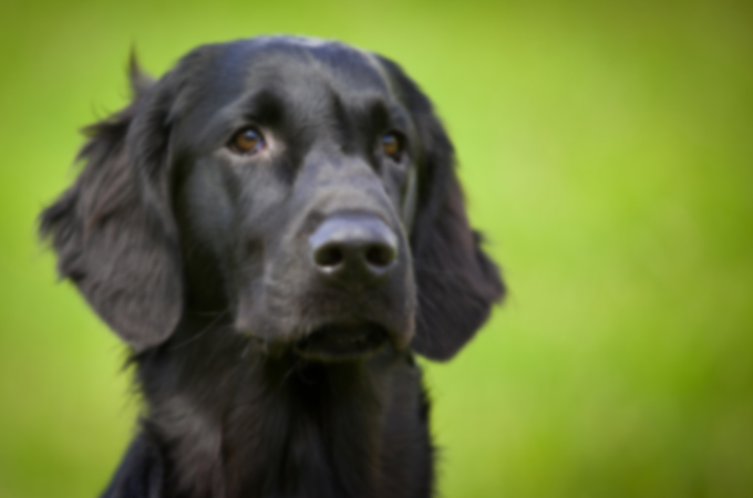 犬と散歩するお婆さんを襲った、とても切なく悲しいお話