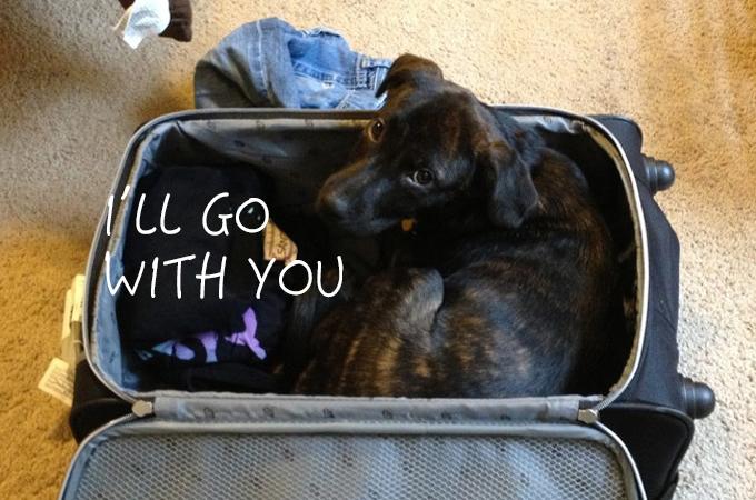 お出かけしようとする飼い主さんの気配をいち早く察知する犬や猫たちの画像15選